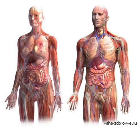 Физическое тело человека