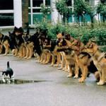 Уверенность в себе развить