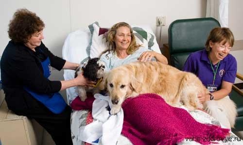 Канистерапия - лечение собаками