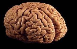 Мозг как божественное начало