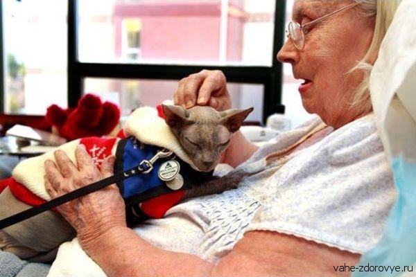 Фелинотерапия - лечение кошками