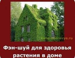 фэн-шуй для здоровья - растения