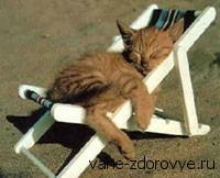 умение расслабляться как кошка