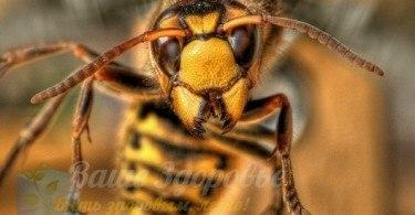 Укусы человека опасными насекомыми